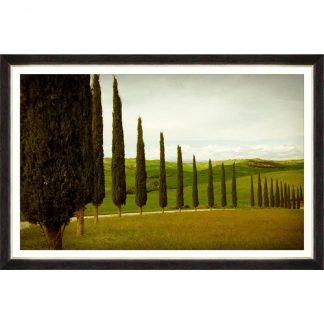 Cypress Road Framed Art