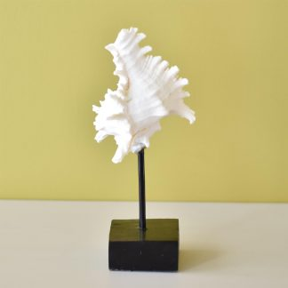 Coral Shell on Stand