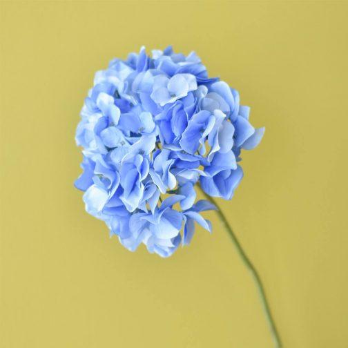 Blue Hydrangea Single Stem 60cm